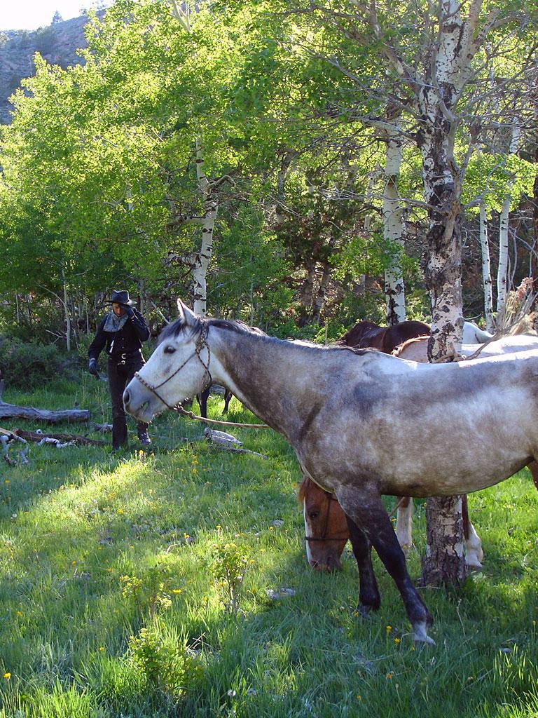 Kurze Ruhepause für Pferd und Reiter