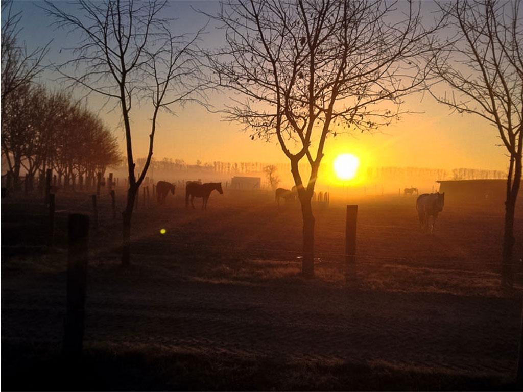 Sonnenaufgang über dem Stuten-Paddock der MQ Ranch