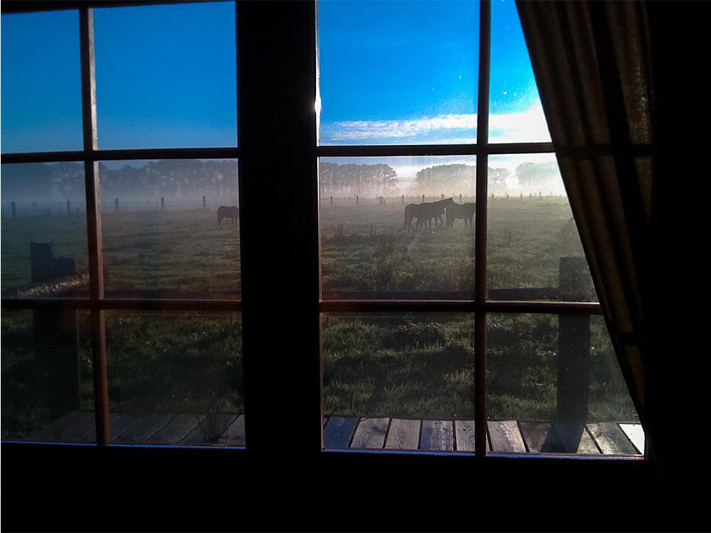 So ist Urlaub auf der MQ Ranch: Ausblick auf die Koppel aus dem Schlafzimmer eines Blockhauses