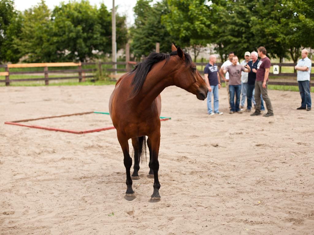 Teambuildingmaßnahme für  Mitarbeiter wird auf der MQ Ranch von professionellen Kommunikationstrainern mit Hilfe von Western-Pferden durchgeführt