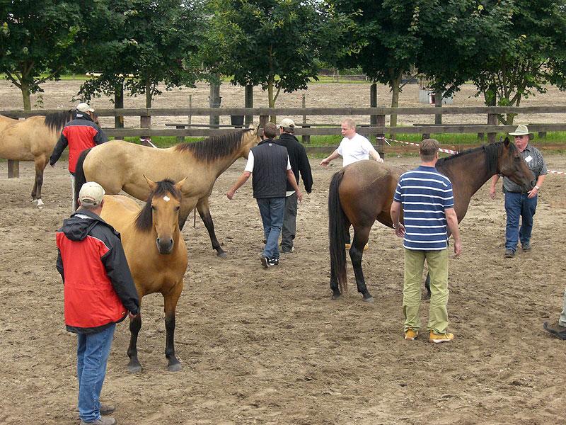 Die Horsebusiness-Academy der MQ Ranch bietet professionelles Coaching zur Arbeit mitr Mitarbeiterteams bis zu 70 Personen