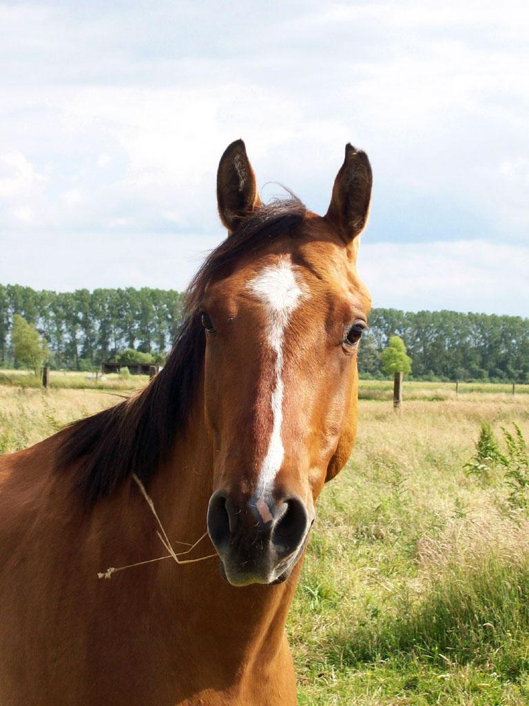 American Quarterhorse auf der MQ Ranch