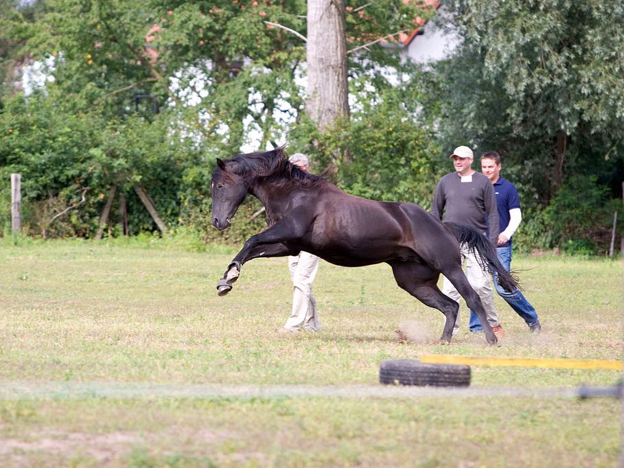 pferdebasiertes Teamtraining