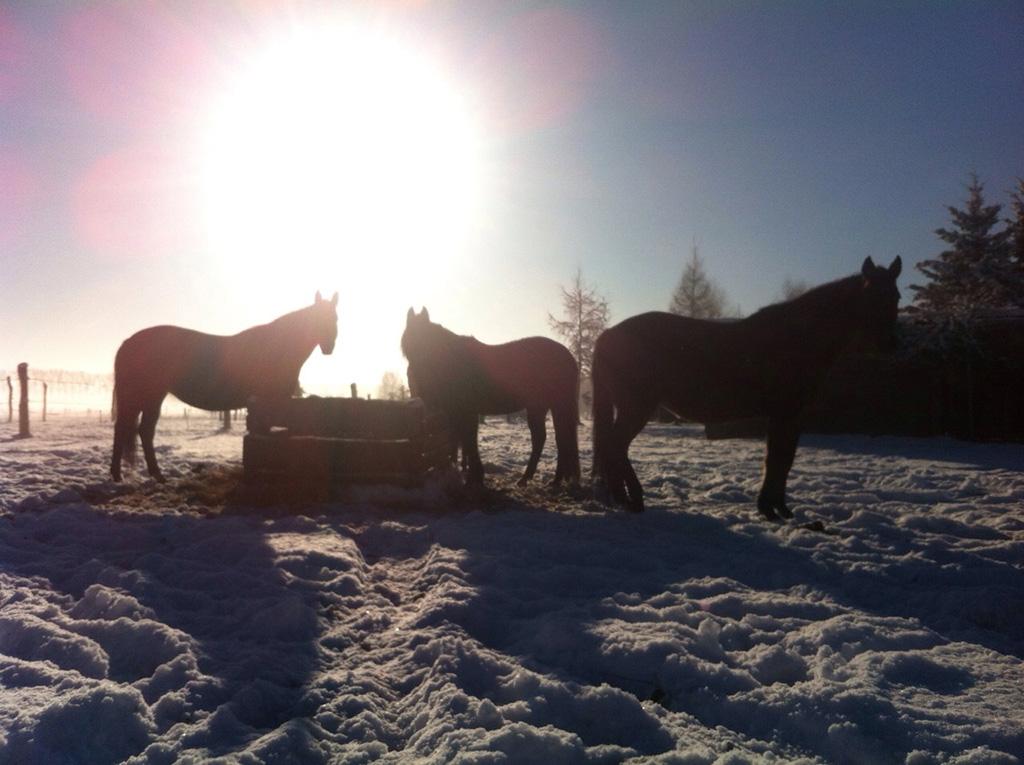 MQ Ranch Pferde im Schnee