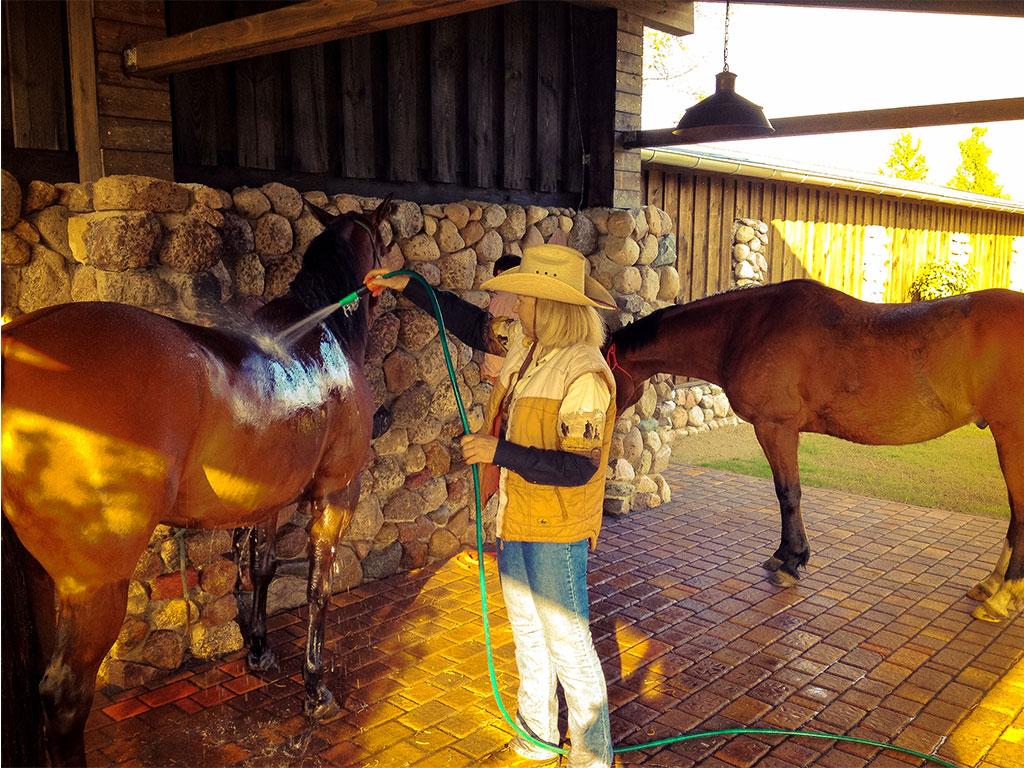 Quarterhorse unter der Dusche auf dem MQ Ranch Pferdewaschplatz