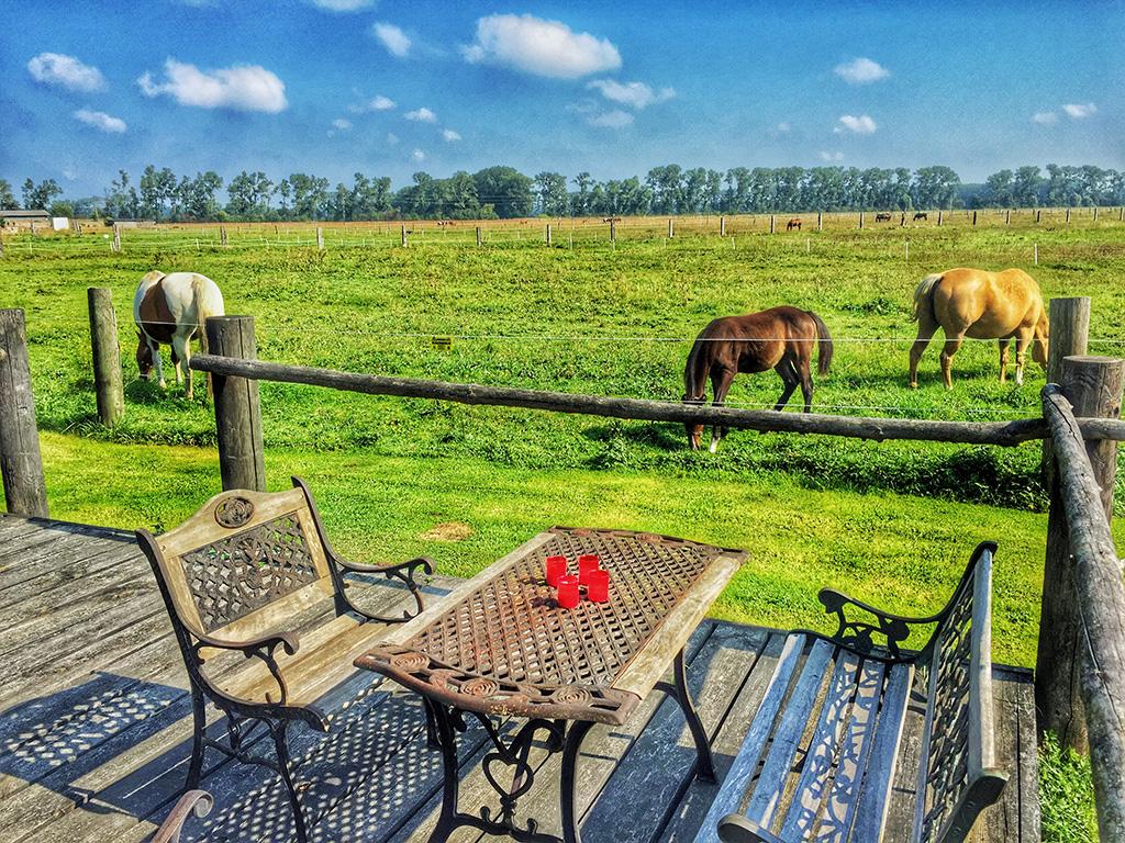 Ausblick von der MQ Ranch Ferienhaus-Terrasse auf die Koppel