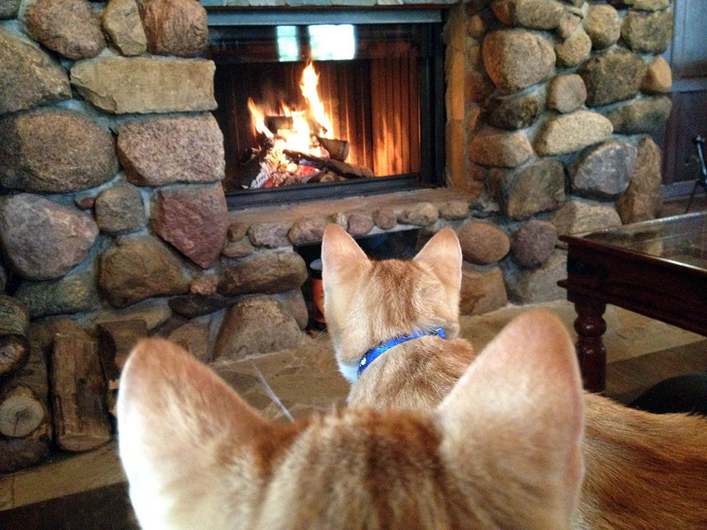 Katzen vor dem Kamin