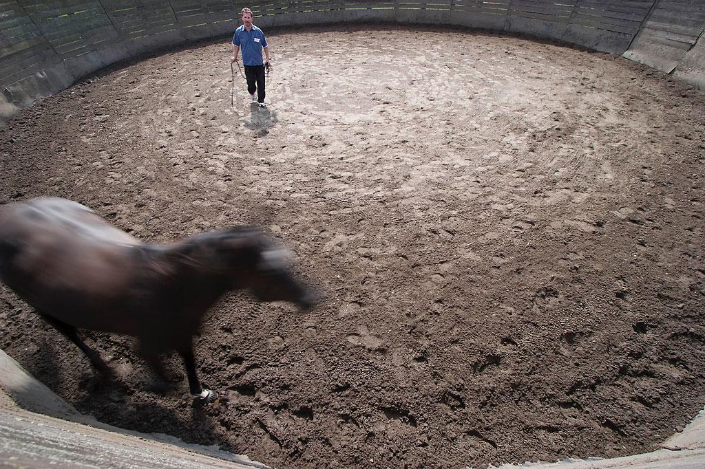 Manager- und Führungskräftetraining mit dem Pferd als Einzel-Coaching  auf der MQ Ranch